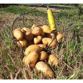 Pommes de terre - charlotte