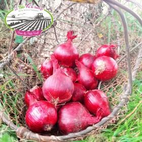 Oignons rouges Bio du Val de Saire